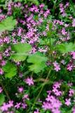 Bett der rosafarbenen Blumen Stockfotos