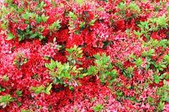 Bett der roten Blumen Lizenzfreies Stockbild