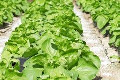 Bett mit einem grünen Salat Lizenzfreies Stockbild