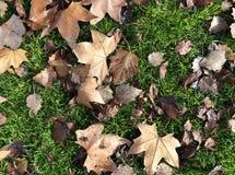 Bett von Blättern auf Gras stockfoto