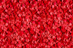 Bett von Blumenblättern der roten Rosen Lizenzfreies Stockfoto
