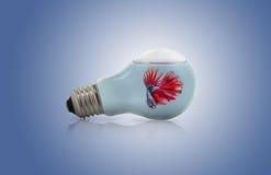 Betta鱼在一个电灯电灯泡里面的水中 免版税库存照片