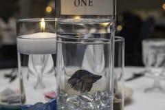 Betta Fish Center Piece em uma tabela fotografia de stock royalty free