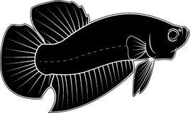 Betta Fish Vector silhouette. Black and white Betta Fish Vector silhouette Royalty Free Stock Photography