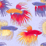 Betta fishes pattern. Betta fishes seamless pattern  for your design Royalty Free Stock Photo