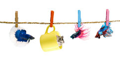 Betta and Hamster hanging on the clothesline Royalty Free Stock Image