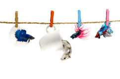 Betta and Hamster hanging on the clothesline Stock Photography
