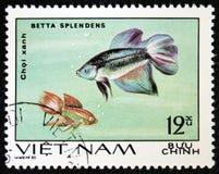Betta Splendens serie ägnas till den dekorativa fisken, circa 1980 Arkivbilder