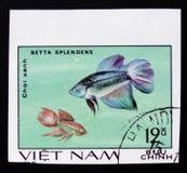 Betta Splendens serie ägnas till den dekorativa fisken, circa 1980 Royaltyfri Fotografi