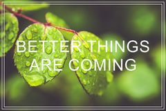 Better Things Are Coming. Green leaves background. Stock Photography