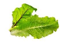 Betterave de laitue fraîche Feuille de salade Prairie verte fraîche de laitue et de betterave photographie stock
