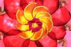 Betterave-Orange plus fin 39 Images libres de droits