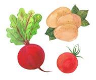 Betterave, tomate et pommes de terre Photos stock