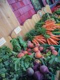Betteraves et carottes Images libres de droits