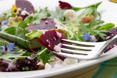Betteraves et salade de verts de bébé Photo libre de droits