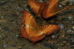 Betterflies Lizenzfreie Stockfotos