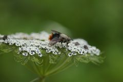 Bettle on flower royalty free stock images