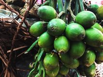 Bettle nuts. Selling in the local market Thailand royalty free stock photo