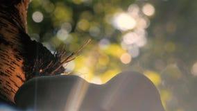 Betulinus die van Piptoporus van de berk polypore paddestoel sporen vrijgeven stock videobeelden