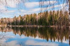 Betulla degli alberi di riflessione del lago Fotografia Stock
