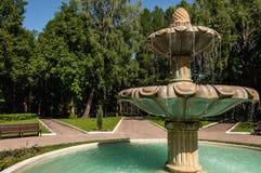 Betulla del parco della fontana Immagine Stock