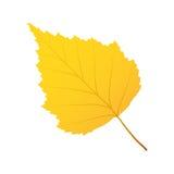 Betulla della foglia di autunno Fotografia Stock