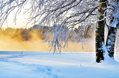 Betulla di inverno sulla banca Fotografia Stock