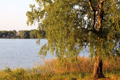 Betulla e lago Fotografie Stock