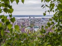 Betulla e lillà di fioritura nella priorità alta Nella vista del fondo della città di Saratov e del fiume Volga, la Russia Immagine Stock