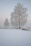 Betulla nel gelo su una radura nevosa Fotografia Stock Libera da Diritti