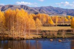 Betulla prima delle montagne fotografie stock libere da diritti