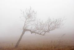 Betulla sola in nebbia. Fotografie Stock