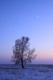 Betulla in steppa in sera Fotografia Stock Libera da Diritti