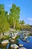 Betulla su una riva pietrosa del lago ladoga Fotografia Stock