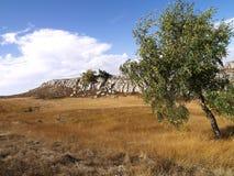 Betulla sul tableland della montagna fotografia stock