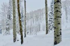 Betulle del Beaver Creek: Scena di serenità di tempo di Natale a Ski Resort immagini stock