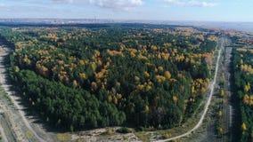 Betulle gialle di vista di occhio di uccello fra i pini e la strada vuota archivi video