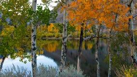 Betulle vicino al lago Fotografia Stock