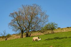 Free Between Church Stretton And Hope Bowdler, Shropshire, England, UK Stock Photography - 143618722