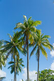 Beuatiful palms from Rangiroa atoll Stock Photos