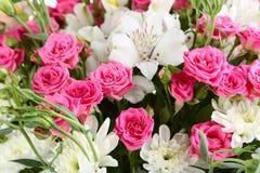 Beuatiful roses Royalty Free Stock Image