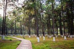 Beuk en Pijnbomen van bodemmening Stock Fotografie