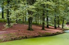 Beukbomen langs de waterkant Stock Afbeeldingen