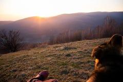 Beundra solnedgången med min pålitliga hund arkivbild