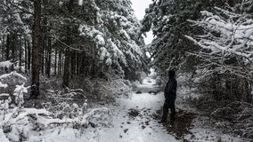 Beundra vinterplatsen Arkivfoto
