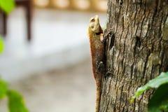 Beunruhigende Eidechse auf einem Baum Stockfoto