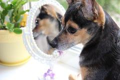 Beunruhigender Hund Stockfoto