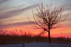 Beunruhigender Sonnenuntergang. Stockbilder