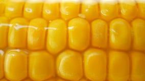 Beurre ou pétrole chaud se renversant au-dessus de maïs frais jaune mûr sur des épis banque de vidéos