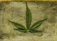 Beurre vert de marijuana après avoir fini la cuisson images libres de droits